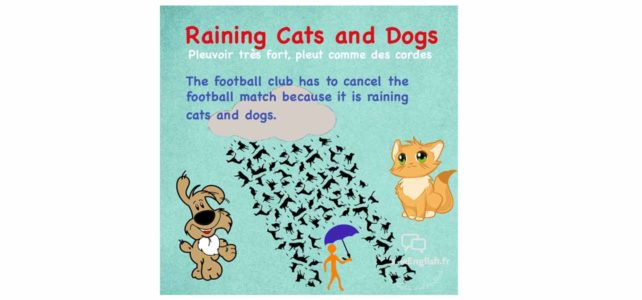 Expression: Raining Cats and Dogs
